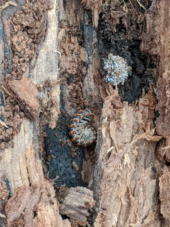 insect in log